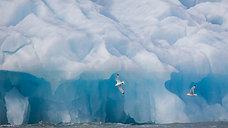 Svalbard, terre de découvertes
