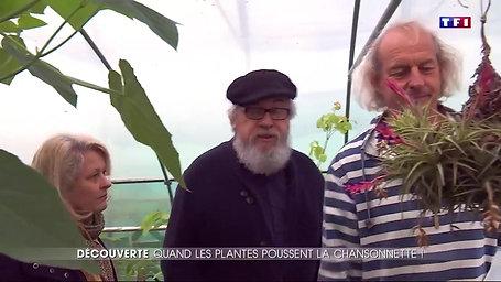 TF1 : Musique - des plantes qui chantent ?
