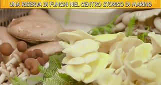 Video Ricette all'italiana Una riserva di funghi nel centro