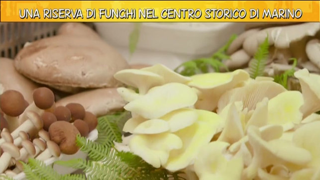 "Video ""Ricette all'italiana"""