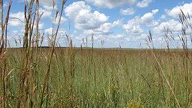 Prairie Abundance