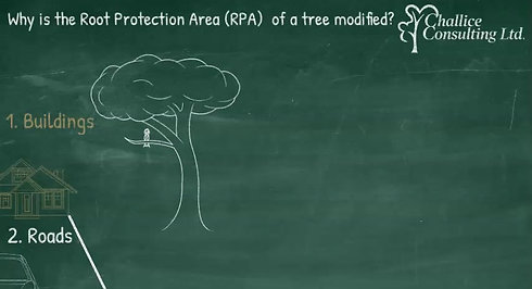 What is the modified RPA of this tree_