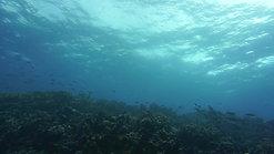 Cindys Reef