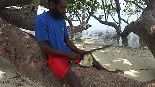 Coconuts at Aoredise