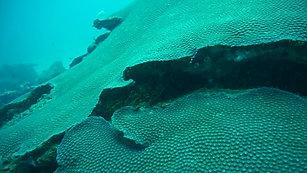 Diving at Aoredise