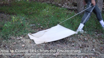 How to Collects Ticks from the Environment