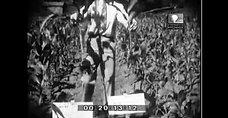 12 Film sur les essai fertilisation en n1931 au Portugal