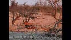 Namibia - Small