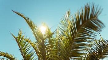 3-28-2021 Palm Sunday