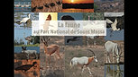 La Faune au Parc National  de  Souss Massa