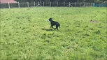 Baloo and Luna - Having a run in the sun :)