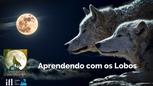 Treinamento Aprendendo com os lobos