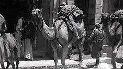 CamelStreet_3D_9317