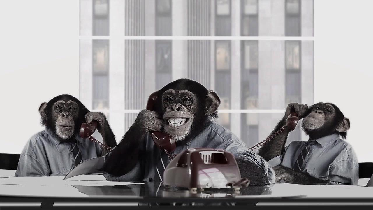 Animal Humor Ad