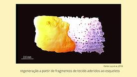 Subsídios para o plano de controle da invasão do coral-sol (Tubastraea coccinea Lesson, 1829) na Reserva Biológica Marinha do Arvoredo: aspectos reprodutivos