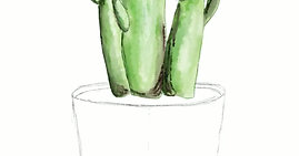 Cactus in Pot Drawing
