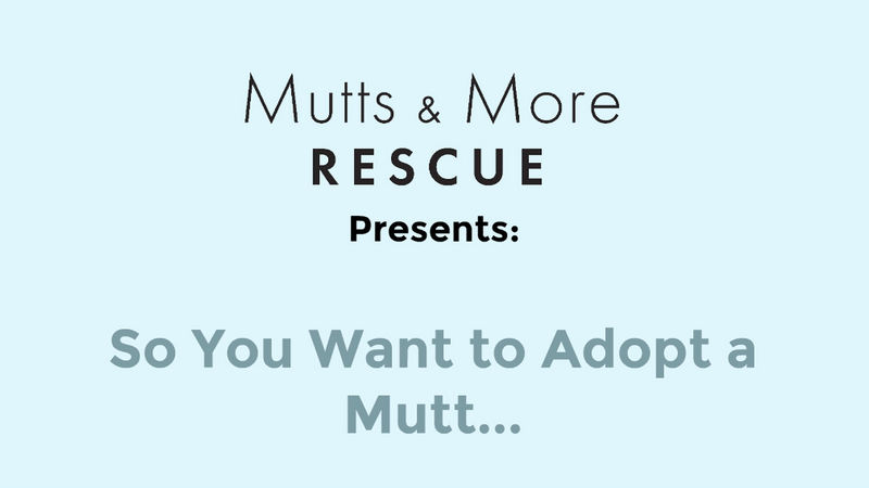 So you want to adopt a mutt