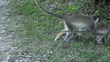 Monkey #2(4k)