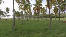 Cove Bay (through the trees #1)4K