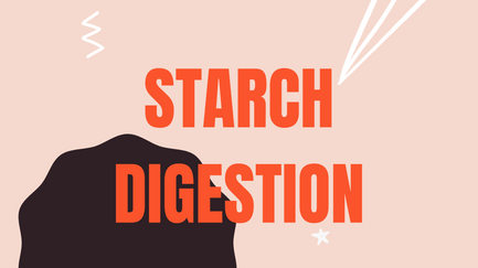 What enzymes are involved in starch digestion?