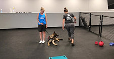 Hippo 1st training session with Shelley