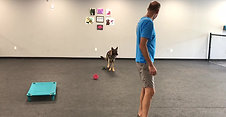 Hippo 1st training session with Andy