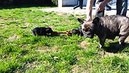 Ingeborg puppies 2014