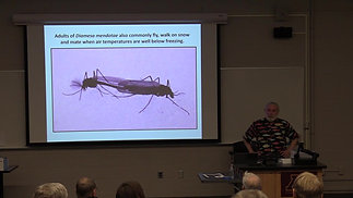 Insect species found in Minnesota during winter months