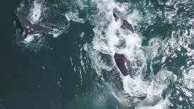 Whales in Llandudno