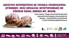 Aspectos reprodutivos de Fossula fossiculifera (d'Orbigny, 1835) (Bivalvia: Mycetopodidae) no Córrego Baixo, Nobres-MT, Brasil