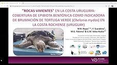 """""""ROCAS VIVIENTES"""" EN LA COSTA URUGUAYA: COBERTURA DE EPIBIOTA BENTÓNICA COMO INDICADORA DE BRUMACIÓN DE TORTUGA VERDE (CHELONIA MYDAS) EN LA COSTA ROCHENSE (URUGUAY)"""