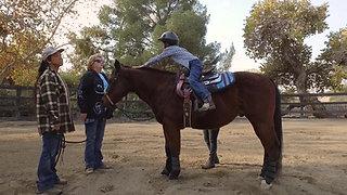 Let's Ride Equestrian Program