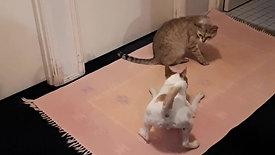 Watch Lush Pets at playtime!
