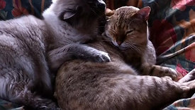 Lush Felines sharing an intimate moment