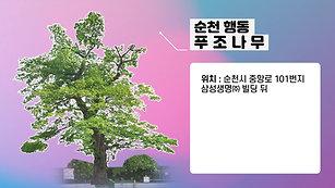 순천 행동 푸조나무