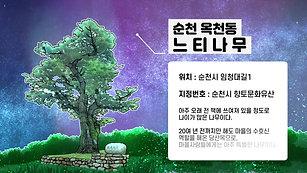 순천 옥천동 느티나무