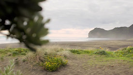 Harrisons - Beach Home