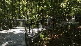 Daintree Rainforest & Aboriginal Experience