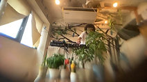 Sunday Afternoon DISCO by DJ Satoshi Miya 7/26