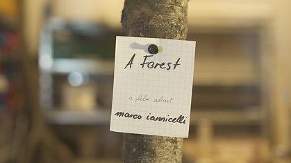 A Forest (short version)
