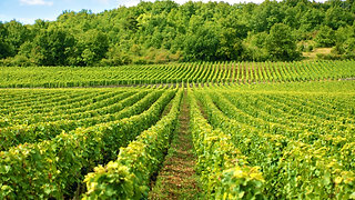 Own A Napa Vineyard TODAY!