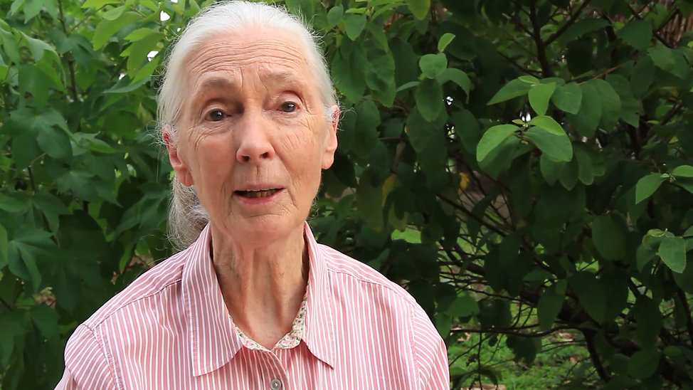 Jane Goodall about Ape Strategy for the World Bank