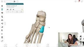 Educação física - Ossos dos membros inferiores sistema esquelético