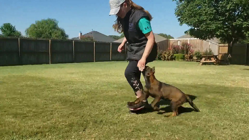 Training (Stormy, Genesis Litter 2019)