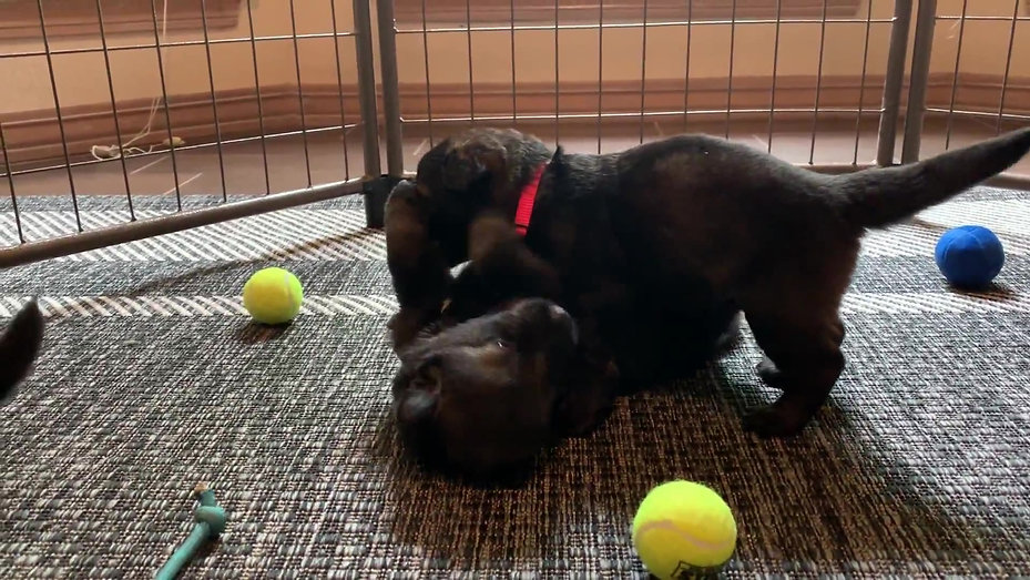 Puppy Action