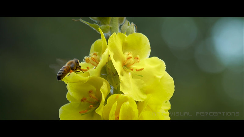 Bee Roll