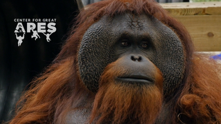 The Founder's Story     Center for Great Apes