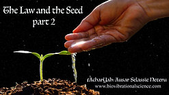 The Law and Seed pt 2