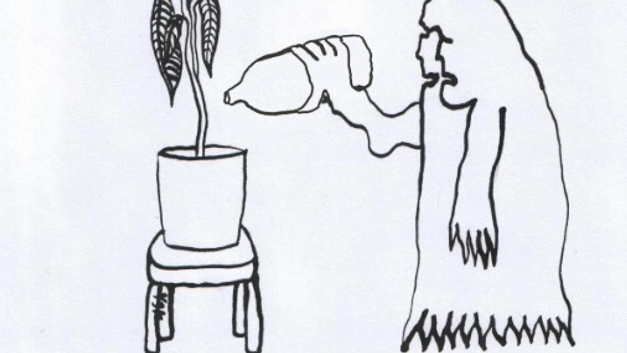 Ember és szobanövény / Human and Plant