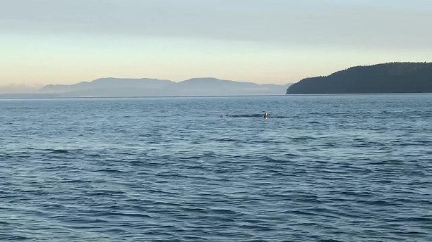 #102 • 19-Nov • Transients - Haro Strait